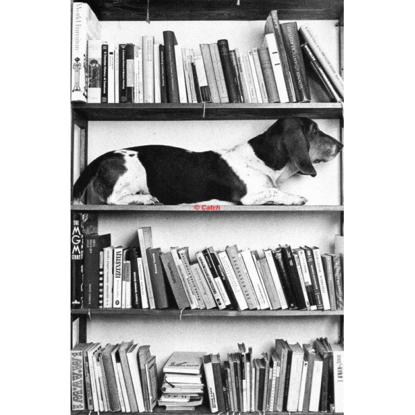 Books and a dog